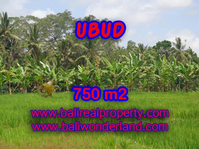 Tanah dijual di Ubud sawah dan hutan 750 m2 di Dekat sentral Ubud