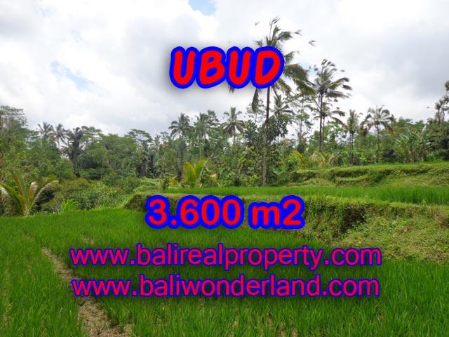 Tanah di Bali dijual View sawah, hutan dan sungai di Ubud Payangan TJUB332