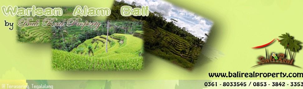 Jual murah Tanah di Ubud  Dijual Tanah murah di Ubud