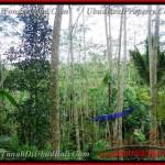 TJUB382 - JUAL TANAH DI UBUD BALI l ( Land for sale ) di Ubud Bali 03