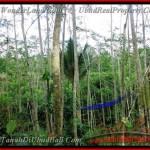 TJUB382 - Tanah dijual ( Land for sale ) di Ubud Bali 01