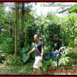 TJUB382 - Tanah dijual ( Land for sale ) di Ubud Bali 06
