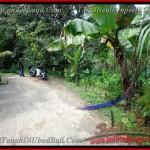TJUB382 - Tanah dijual ( Land for sale ) di Ubud Bali 09