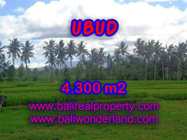 TANAH DI UBUD MURAH DIJUAL TJUB370 - INVESTASI PROPERTY DI BALI