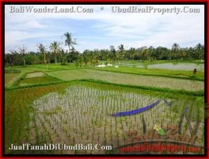 TJUB477 Tanah dijual MURAH di UBUD - Land for sale in Ubud Bali 7