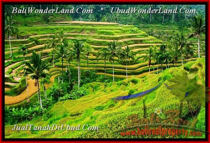 Ceking Rice Terrace - Tegalalang Ubud Gianyar Bali