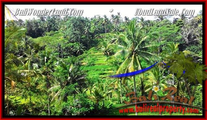 TANAH MURAH di UBUD DIJUAL 2,500 m2 di Ubud Tegalalang