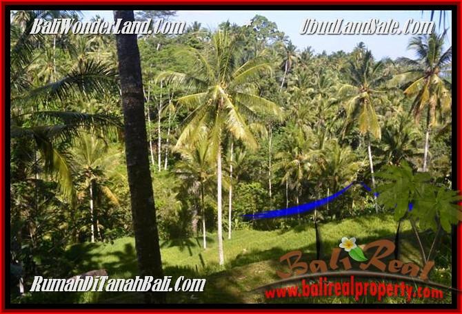 JUAL MURAH TANAH di UBUD BALI 2,500 m2 di Ubud Tegalalang