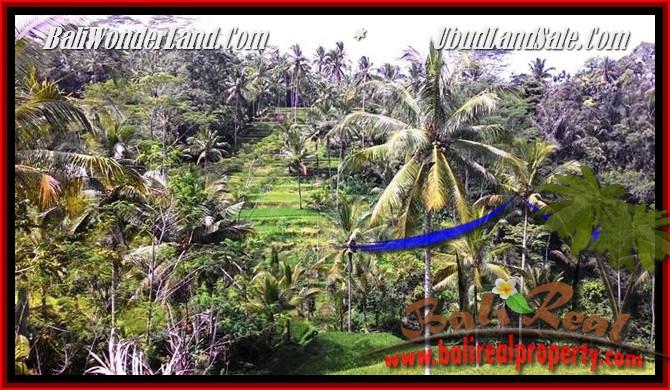 TANAH MURAH DIJUAL di UBUD BALI 2,500 m2 di Ubud Tegalalang