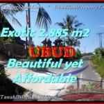 JUAL MURAH TANAH di UBUD BALI Untuk INVESTASI TJUB442