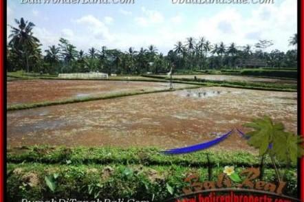 JUAL MURAH TANAH di UBUD 1,000 m2 di Sentral Ubud