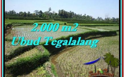 TANAH MURAH di UBUD BALI 2,000 m2 di Ubud Tegalalang