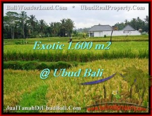 TANAH di UBUD BALI DIJUAL MURAH 16 Are View sawah lingkungan villa