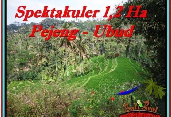 TANAH MURAH JUAL di UBUD BALI 120 Are View Sawah dan Tebing