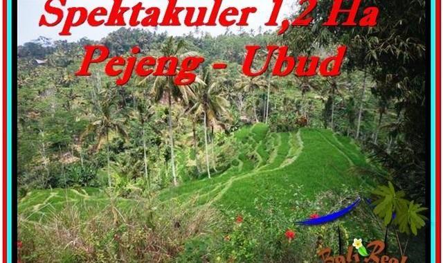 TANAH di UBUD BALI DIJUAL MURAH 120 Are View Sawah dan Tebing