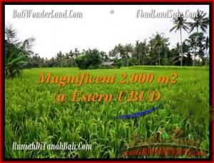 TANAH MURAH di UBUD BALI 2,000 m2 di Ubud Pejeng