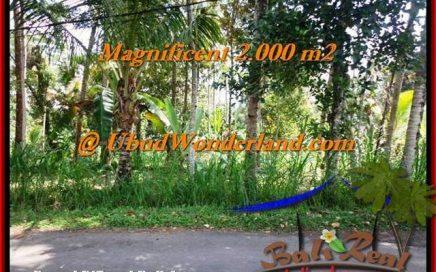 JUAL TANAH di UBUD 2,000 m2 View Tebing dan sungai