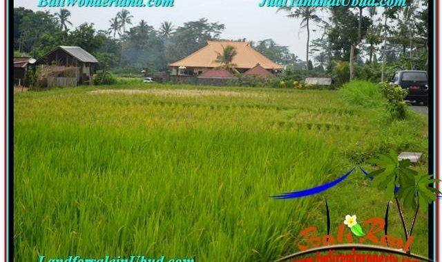 TANAH DIJUAL MURAH di UBUD BALI 15 Are di Ubud Tampak Siring