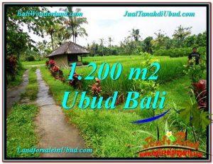 JUAL TANAH MURAH di UBUD Untuk INVESTASI TJUB559