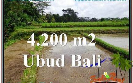 TANAH DIJUAL MURAH di UBUD 4,200 m2 di Ubud Tampak Siring