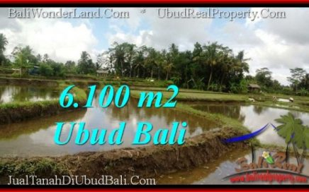DIJUAL TANAH MURAH di UBUD BALI 61 Are di Ubud Pejeng