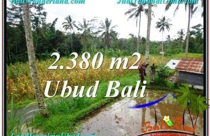 TANAH MURAH DIJUAL di UBUD BALI 23.8 Are di Ubud Payangan