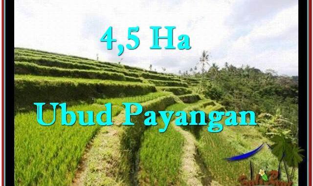 DIJUAL MURAH TANAH di UBUD BALI 450 Are di Ubud Payangan