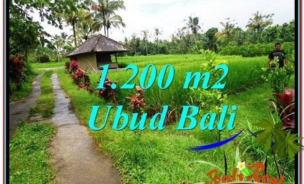 JUAL TANAH di UBUD BALI 12 Are di Ubud Payangan