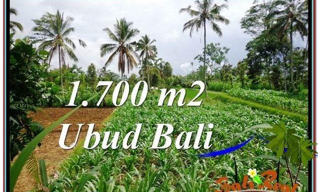 JUAL TANAH di UBUD BALI 17 Are di Ubud Payangan