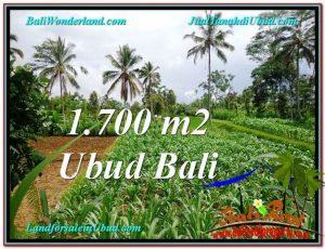 TANAH MURAH DIJUAL di UBUD BALI TJUB560