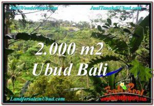 INVESTASI PROPERTI, TANAH MURAH DIJUAL di UBUD TJUB573
