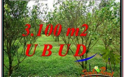 TANAH di UBUD JUAL MURAH 3,100 m2 View kebun