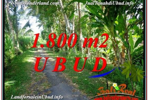 TANAH MURAH di UBUD BALI DIJUAL 18 Are di Ubud Payangan