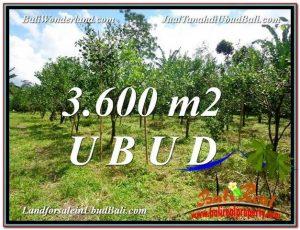 JUAL MURAH TANAH di UBUD 36 Are View kebun