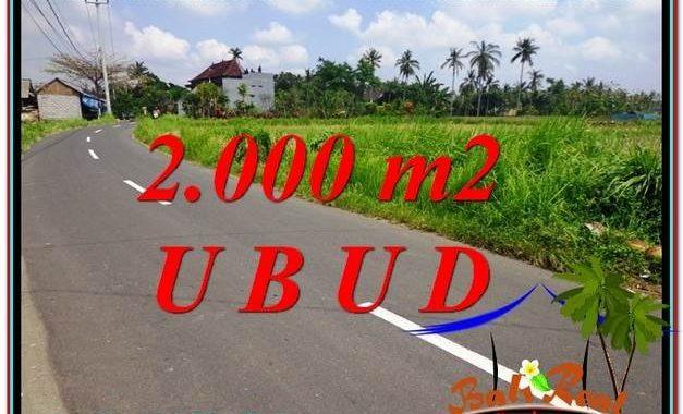 TANAH MURAH di UBUD BALI 20 Are di Sentral Ubud