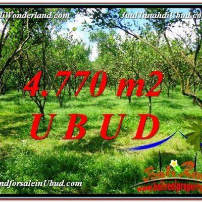 TANAH di UBUD BALI DIJUAL MURAH 4,770 m2  View kebun