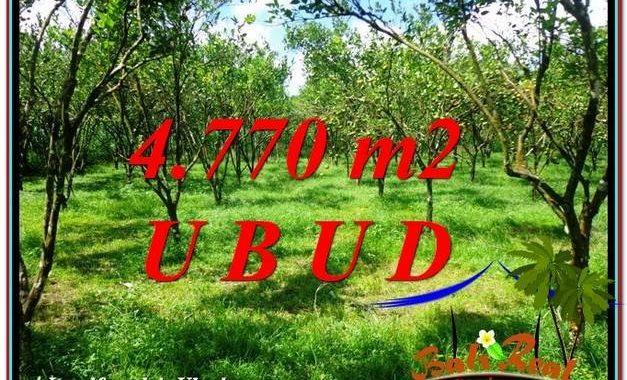 DIJUAL TANAH di UBUD 48 Are di Ubud Tegalalang
