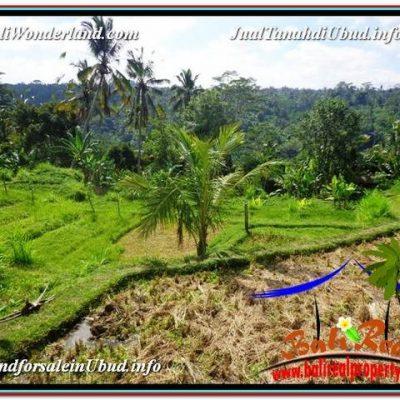 DIJUAL MURAH TANAH di UBUD BALI 156 Are di Ubud Payangan