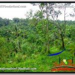 DIJUAL MURAH TANAH di UBUD BALI 2,990 m2 di Ubud Tegalalang