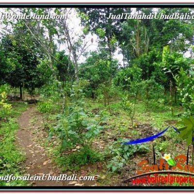 DIJUAL MURAH TANAH di UBUD BALI Untuk INVESTASI TJUB591