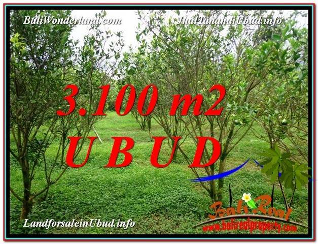 TANAH di UBUD DIJUAL MURAH 3,100 m2 di Ubud Tegalalang