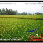 TANAH di UBUD BALI DIJUAL MURAH 3,500 m2 View Sawah link Villa