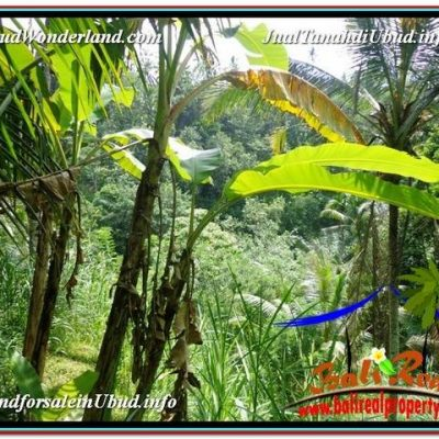 DIJUAL MURAH TANAH di UBUD BALI 1,800 m2 di Ubud Payangan