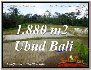 TANAH di UBUD BALI DIJUAL MURAH Untuk INVESTASI TJUB613