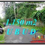 TANAH MURAH di UBUD BALI 1,150 m2 di Ubud Pejeng