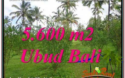 TANAH DIJUAL MURAH di UBUD 5,600 m2 di Ubud Tegalalang
