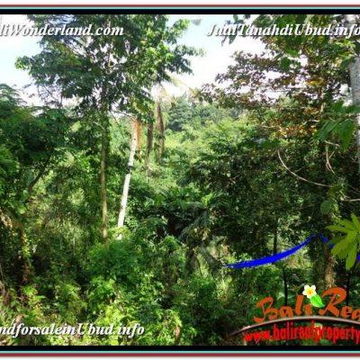 JUAL TANAH MURAH di UBUD 2,500 m2 di Ubud Pejeng