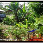 JUAL MURAH TANAH di UBUD BALI 2,500 m2 View Tebing dan Sungai lingkungan Villa