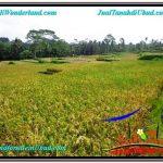TANAH MURAH di UBUD 2,150 m2 View Sawah dan Gunung lingkungan Villa
