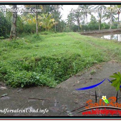 JUAL MURAH TANAH di UBUD BALI 5,600 m2  View Tebing dan kebun